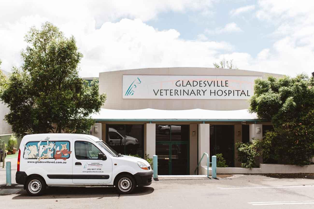 Gladesville Veterinary Hospital