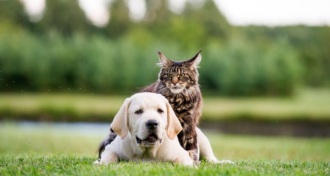 General Vet Services for Pets