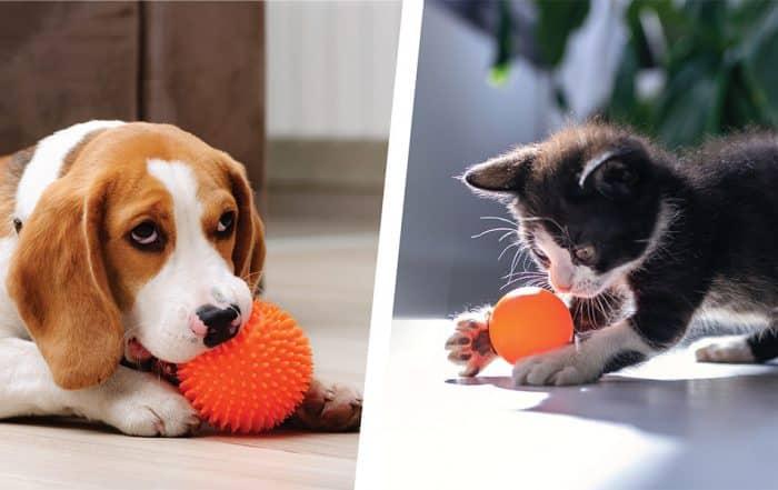 Dog & Cat Boarding