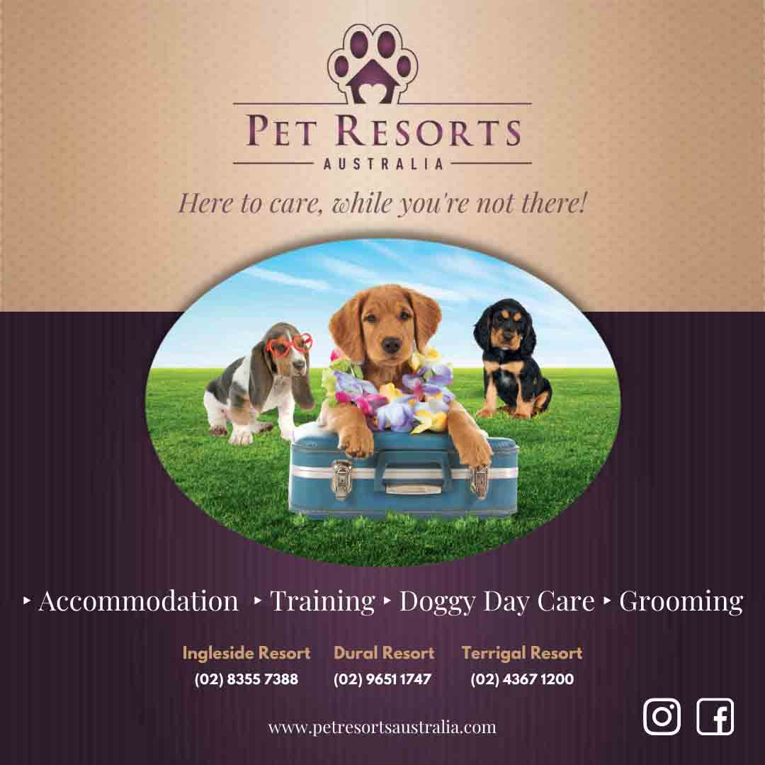 ‣ Accommodation ‣ Training ‣ Doggy Day Care ‣ Grooming